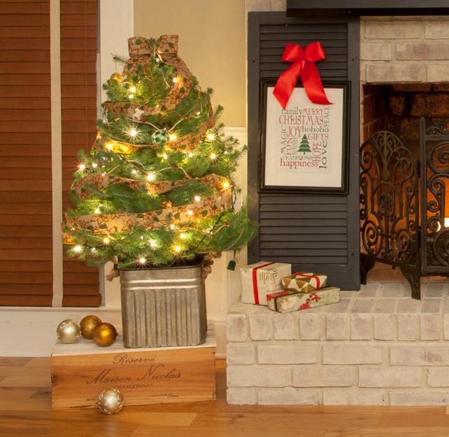 Planting-live-Christmas-tree