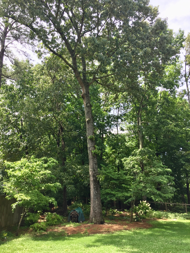 Oak Tree Trim News Update