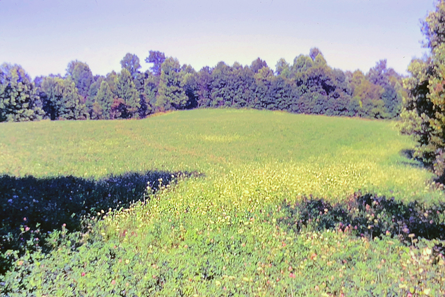 An old slightly faded photo showing an open field of grass and wildflowers surrounded by trees