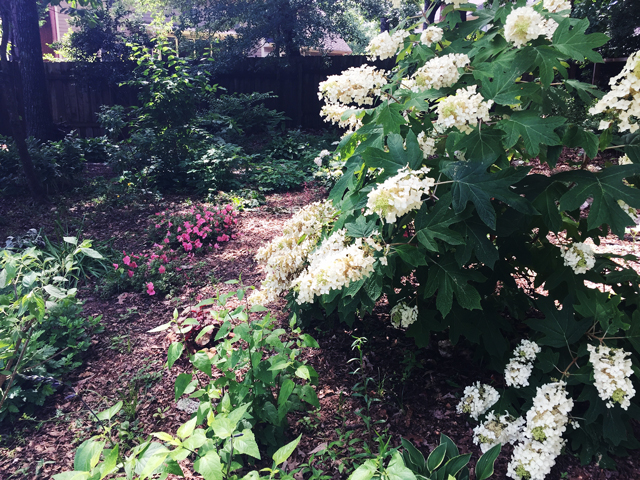 Our backyard woodland garden is a very calming place to be