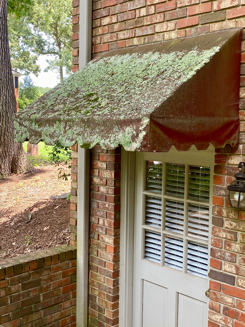 shady side of awning shows no lichens or moss