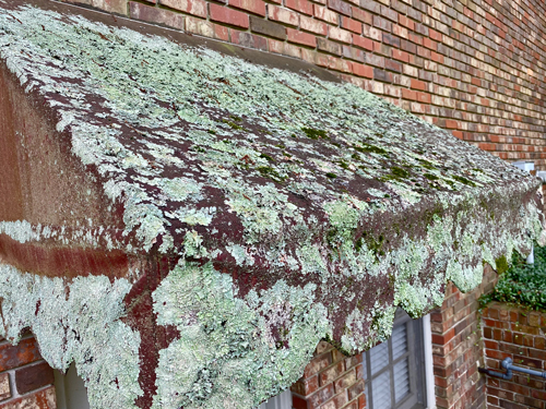 dense lichen covers a canvas awning