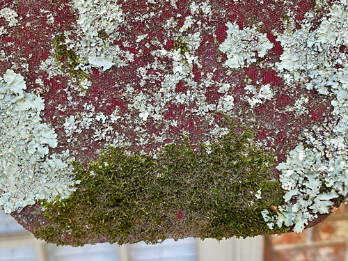 lichens and moss heavily cover edge of awning