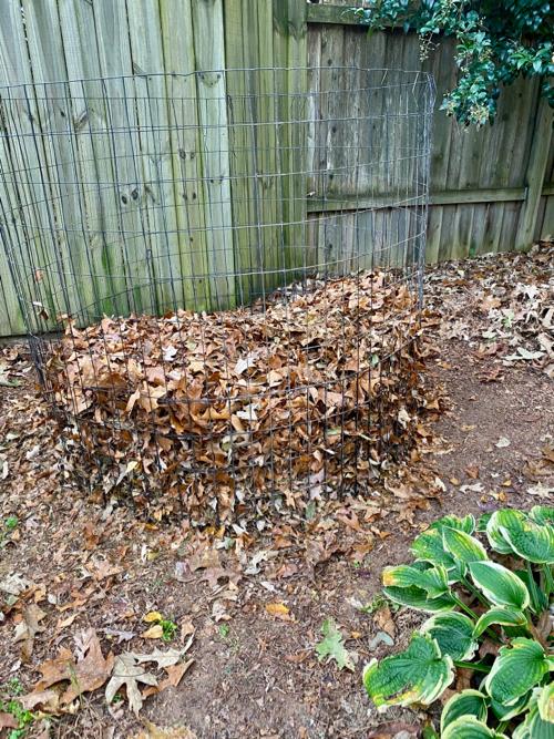 dry_leaves_in_bin
