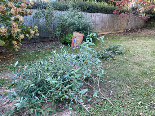 Just cut branches of Butterfly Bush lay on grass