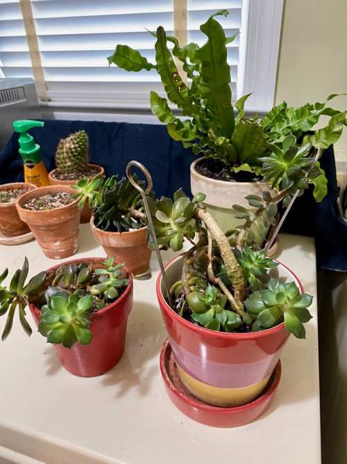 small pots contain succulents to be used in final arrangement