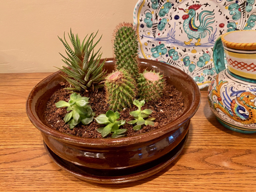 Planter is complete with 7 small sections of cacti