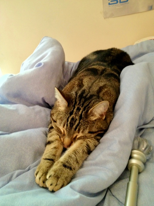 kitty stretched out on blanket