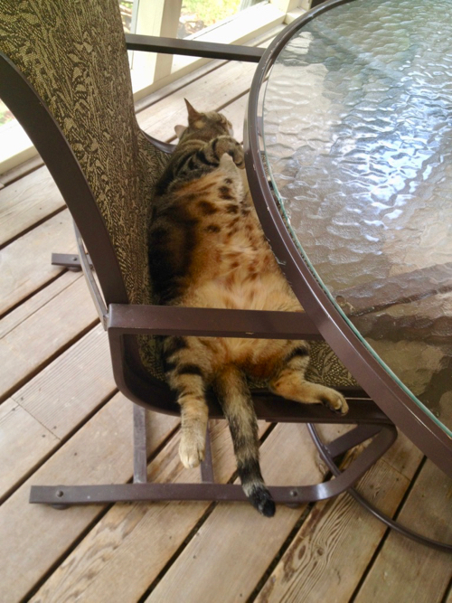 Fat cat on patio chair